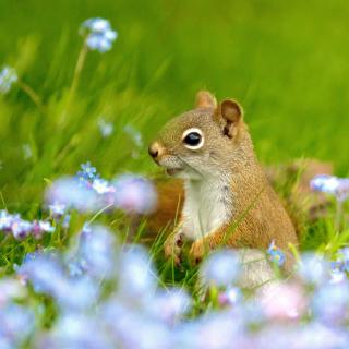 Squirrel in Taiga - Obrázkek zdarma pro 1024x1024