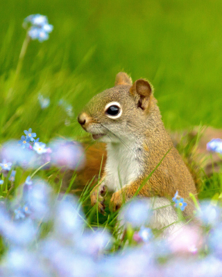 Squirrel in Taiga - Obrázkek zdarma pro 352x416