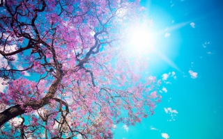 Blooming Spring Background for Android, iPhone and iPad
