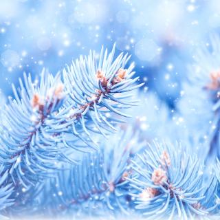 Snow on cones - Obrázkek zdarma pro 2048x2048
