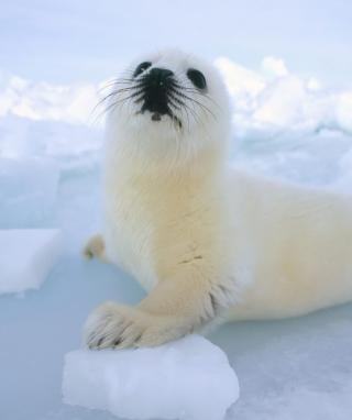 Seal Baby - Obrázkek zdarma pro 360x480
