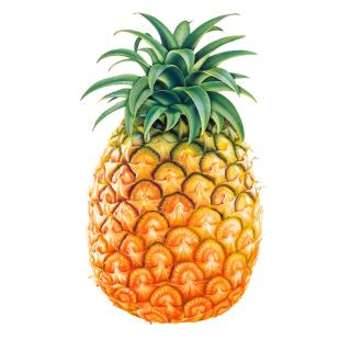 Pineapple - Obrázkek zdarma pro 1024x1024