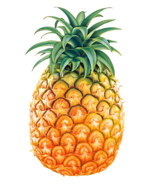 Pineapple - Obrázkek zdarma pro Nokia Asha 305