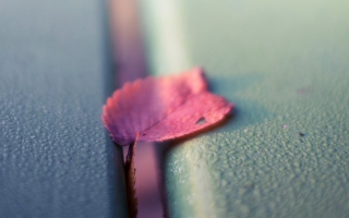 Pink Petal Background for Android, iPhone and iPad