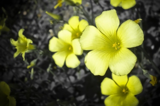Yellow Flowers Background for Android, iPhone and iPad