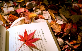 Free Red Leaf On A Book Picture for Android, iPhone and iPad