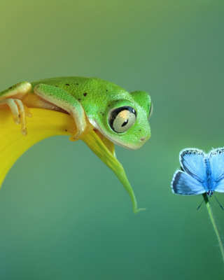 Frog and butterfly - Obrázkek zdarma pro Nokia Asha 308