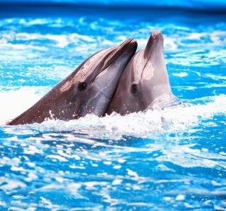 Dolphins Couple - Obrázkek zdarma pro iPad 3