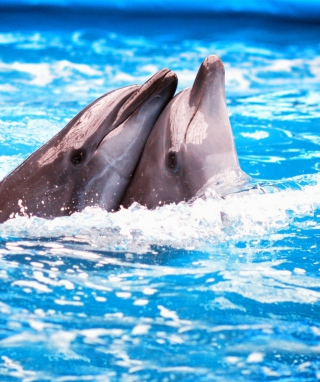 Dolphins Couple - Obrázkek zdarma pro Nokia Asha 305
