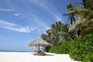 Maldives White Beach Picture for Android, iPhone and iPad