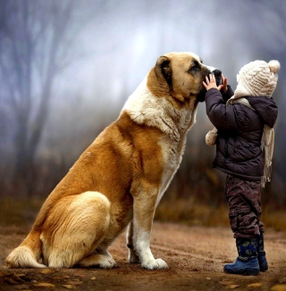 I Love Dogs - Obrázkek zdarma pro 320x320