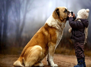 Free I Love Dogs Picture for Android, iPhone and iPad