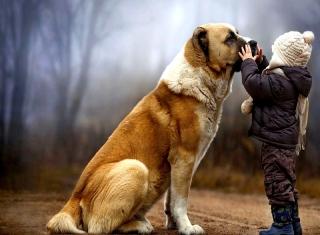 I Love Dogs - Obrázkek zdarma pro 220x176