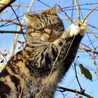 Cat on Tree - Obrázkek zdarma pro 1024x1024