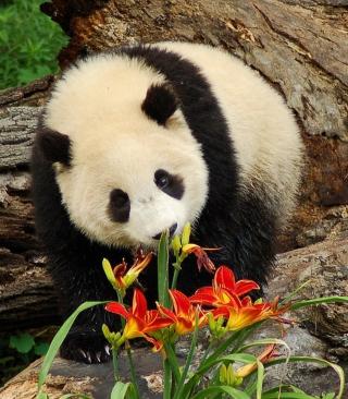 Panda Smelling Flowers - Obrázkek zdarma pro Nokia C1-01