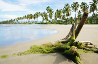 Palms On Island Wallpaper for Android, iPhone and iPad