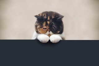 Free Sad Cat Picture for Android, iPhone and iPad