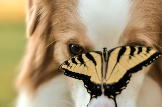 Free Dog And Butterfly Picture for Android, iPhone and iPad