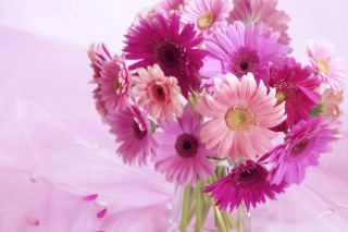 Gerbera Bouquet Idea - Obrázkek zdarma pro 1152x864