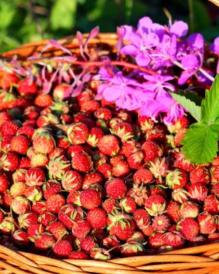 Wild Strawberry - Obrázkek zdarma pro Nokia Asha 502
