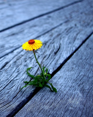 Little Yellow Flower On Wooden Planks - Obrázkek zdarma pro 352x416