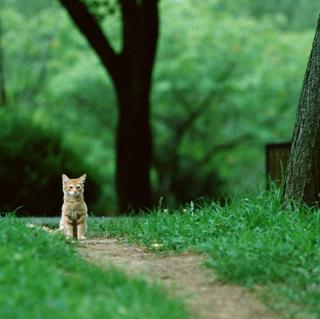 Little Cat In Park - Obrázkek zdarma pro 1024x1024