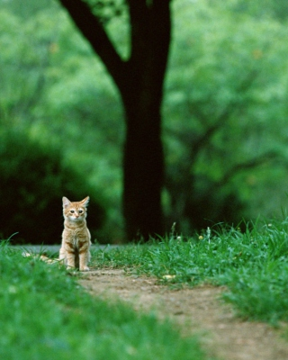 Little Cat In Park - Obrázkek zdarma pro iPhone 3G