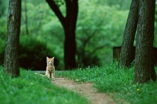 Little Cat In Park - Obrázkek zdarma pro 1600x900