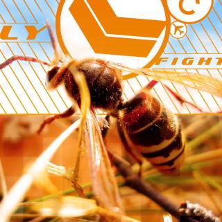 Bee - Obrázkek zdarma pro 1024x1024
