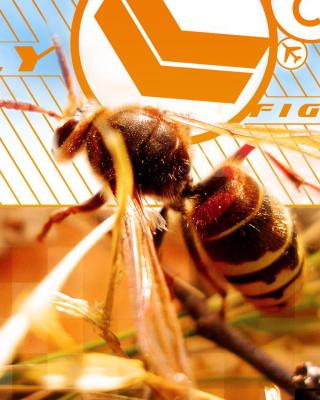 Bee - Obrázkek zdarma pro 480x800