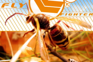 Bee - Obrázkek zdarma pro 320x240