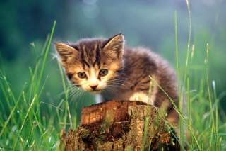 Little Cute Kitty Picture for Android, iPhone and iPad