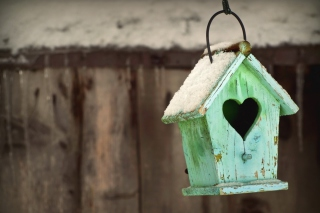 Valentine's Birds House Background for Android, iPhone and iPad