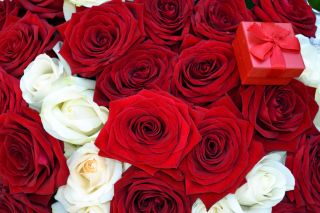 Free Roses for Propose Picture for Nokia Asha 200