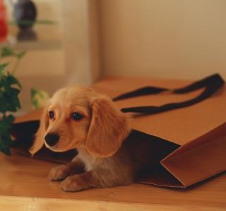Puppy In Paper Bag - Obrázkek zdarma pro 2048x2048