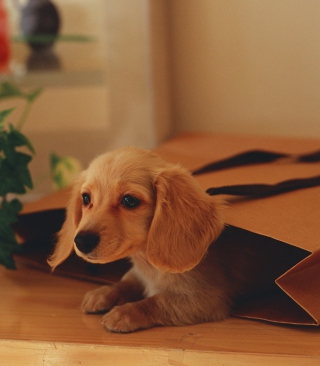 Puppy In Paper Bag - Obrázkek zdarma pro Nokia Asha 502