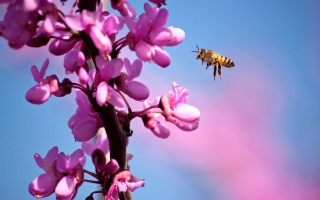 Free Purple Flowers And Bee Picture for Android, iPhone and iPad