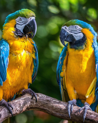 Blue and Yellow Macaw Spot sfondi gratuiti per Nokia N8