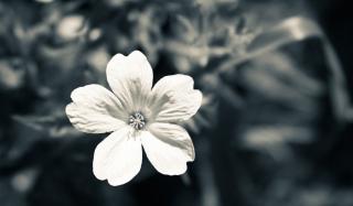 Single White Flower - Fondos de pantalla gratis Stub device