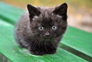 Cute Little Black Kitten Background for Android, iPhone and iPad