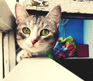 Cute Gray Kitten With Green Eyes - Obrázkek zdarma pro 1024x1024