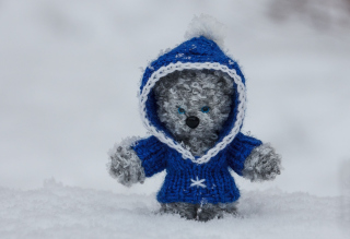 Free Snow Bear Picture for Android, iPhone and iPad