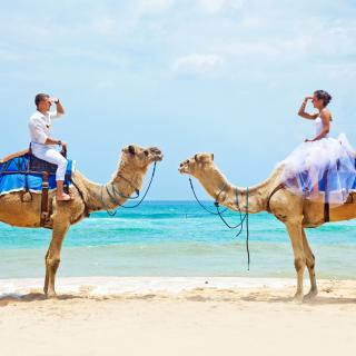 Two Camels - Obrázkek zdarma pro 1024x1024
