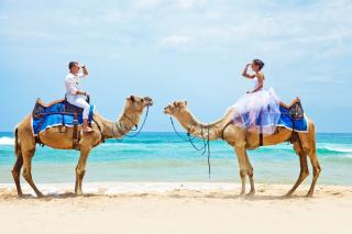 Two Camels - Obrázkek zdarma pro 2560x1600