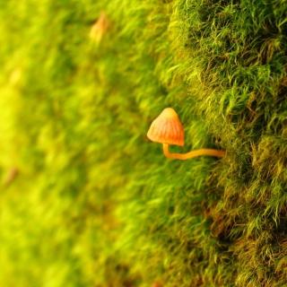 Little Sprout - Obrázkek zdarma pro 320x320