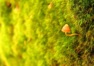 Little Sprout - Obrázkek zdarma pro 1024x600