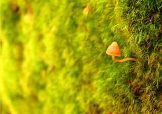 Little Sprout - Obrázkek zdarma pro LG P700 Optimus L7