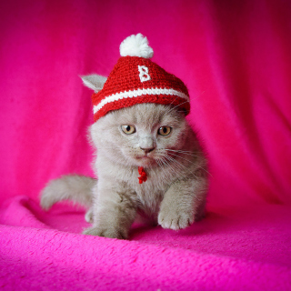 Cute Grey Kitten In Little Red Hat - Obrázkek zdarma pro iPad Air