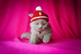 Cute Grey Kitten In Little Red Hat - Obrázkek zdarma pro Android 1600x1280