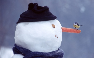 Snowman And Sparrow Background for Android, iPhone and iPad
